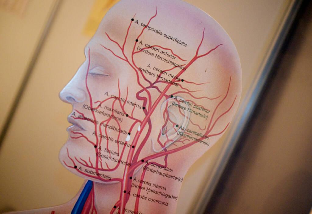 Kopf Gehirn Denken (08.03.2015)