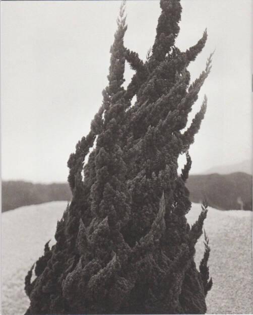Gerry Johansson - Tree Stone Water, Libraryman 2015, Cover - http://josefchladek.com/book/gerry_johansson_-_tree_stone_water, © (c) josefchladek.com (15.05.2015)