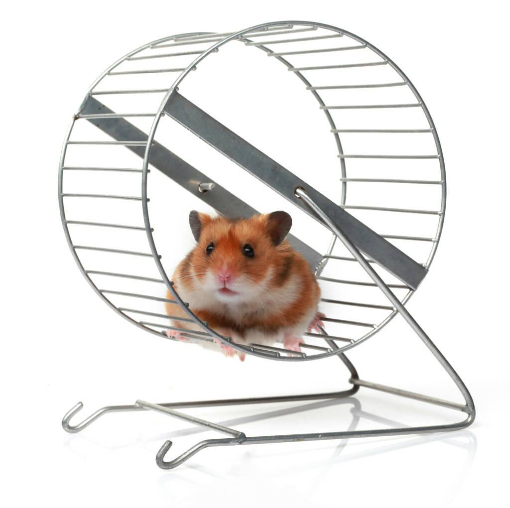 Hamster, Hamsterrad, Kleintier - http://www.shutterstock.com/de/pic-162923342/stock-photo-hamster-in-a-wheel.html, © www.shutterstock.com (17.05.2015)