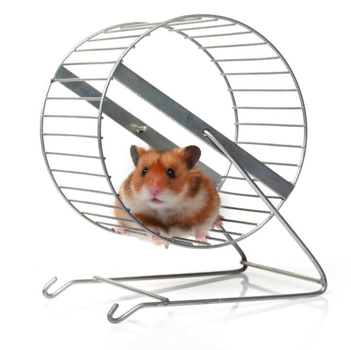 Hamster, Hamsterrad, Kleintier - http://www.shutterstock.com/de/pic-162923342/stock-photo-hamster-in-a-wheel.html
