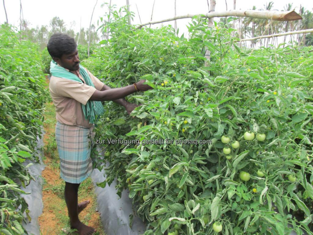 Bayer CropScience kauft Gemüsesaatgutunternehmen SeedWorks India Pvt. Ltd, (C) Bayer CropScience AG, © Aussendung (01.06.2015)