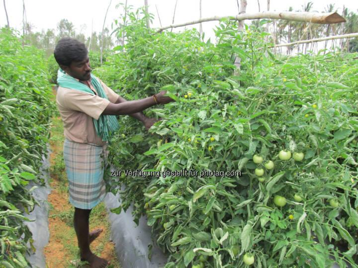 Bayer CropScience kauft Gemüsesaatgutunternehmen SeedWorks India Pvt. Ltd, (C) Bayer CropScience AG