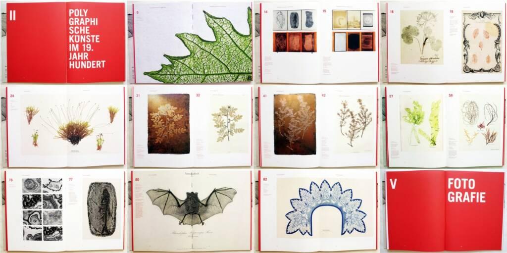 Simon Weber-Unger - Naturselbstdrucke, Album Verlag 2014, Beispielseiten, sample spreads  - http://josefchladek.com/book/simon_weber-unger_-_naturselbstdrucke, © (c) josefchladek.com (19.06.2015)