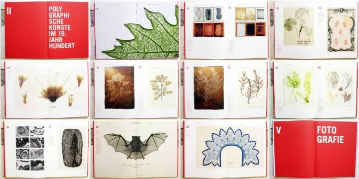 Simon Weber-Unger - Naturselbstdrucke, Album Verlag 2014, Beispielseiten, sample spreads  - http://josefchladek.com/book/simon_weber-unger_-_naturselbstdrucke