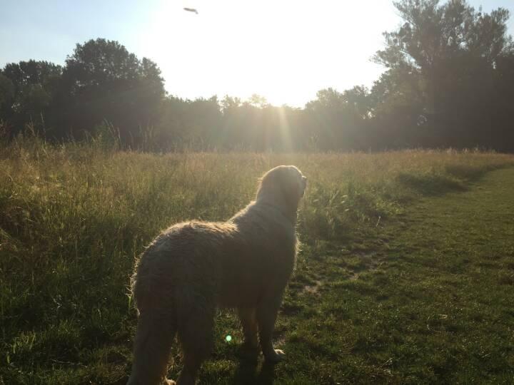 Hund, Sonne, Gegenlicht