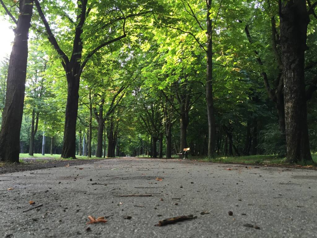 Allee, Bäume, Weg (11.07.2015)