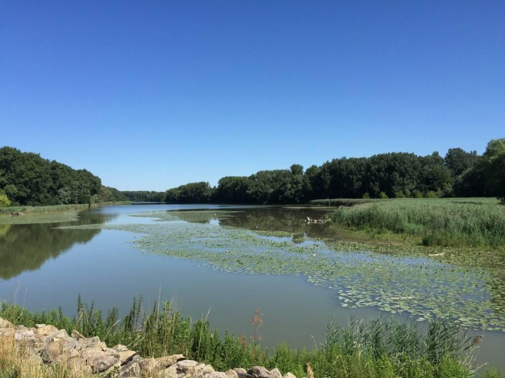 Donauauen (12.07.2015)
