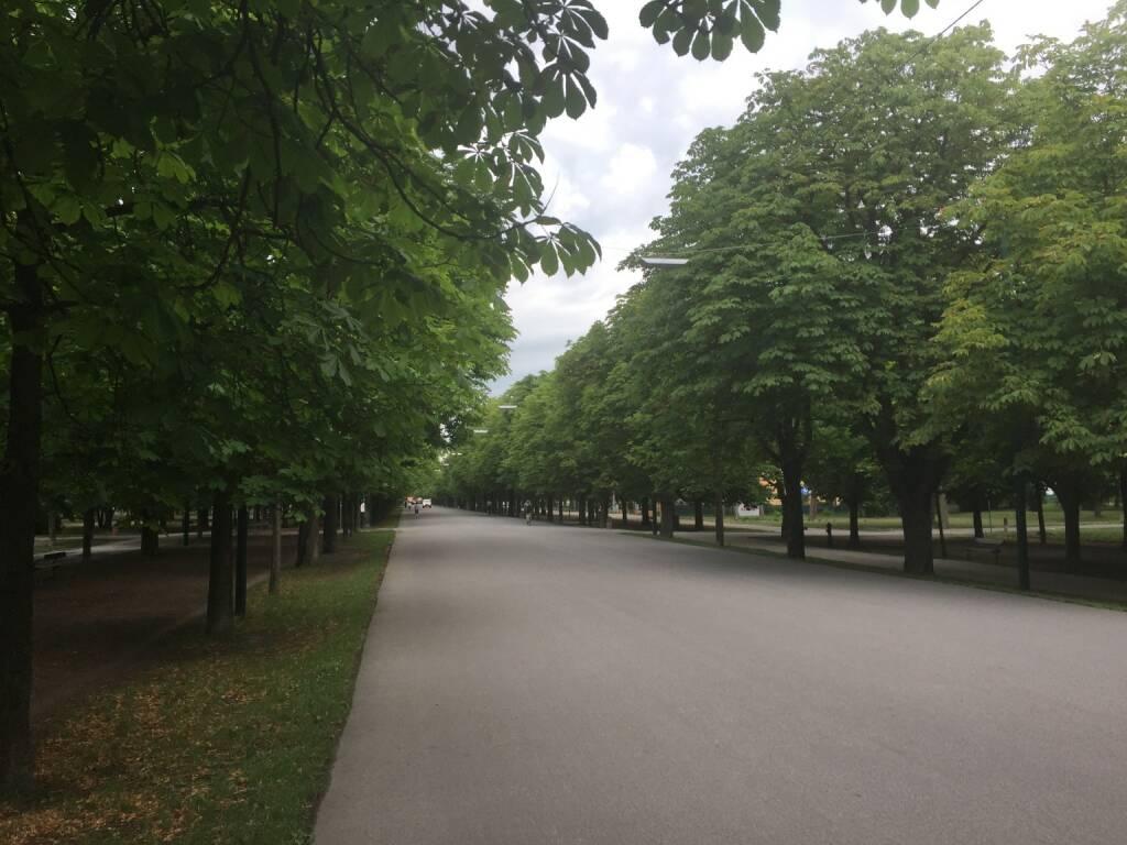 Prater Hauptallee, menschenleer, leer (16.07.2015)