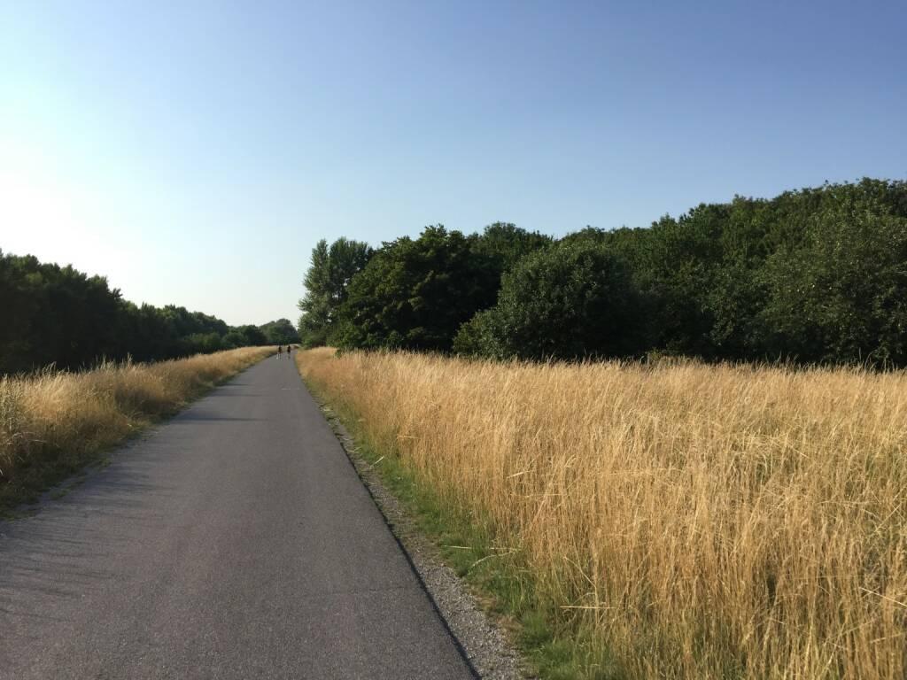 Weg, Donauinsel (17.07.2015)