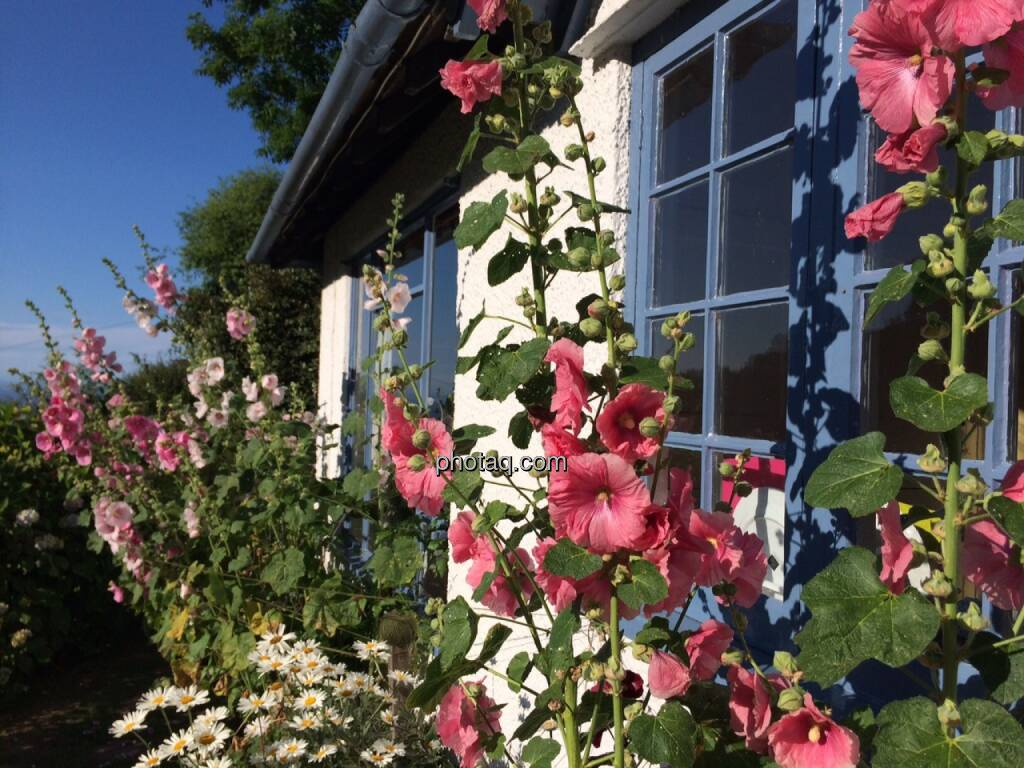 Cottage, England, © Martina Draper (19.07.2015)