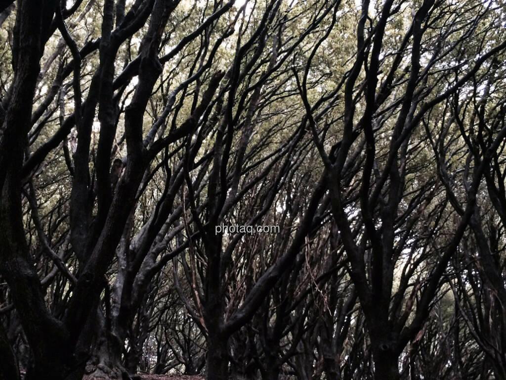 creepy woods, © Martina Draper (24.07.2015)