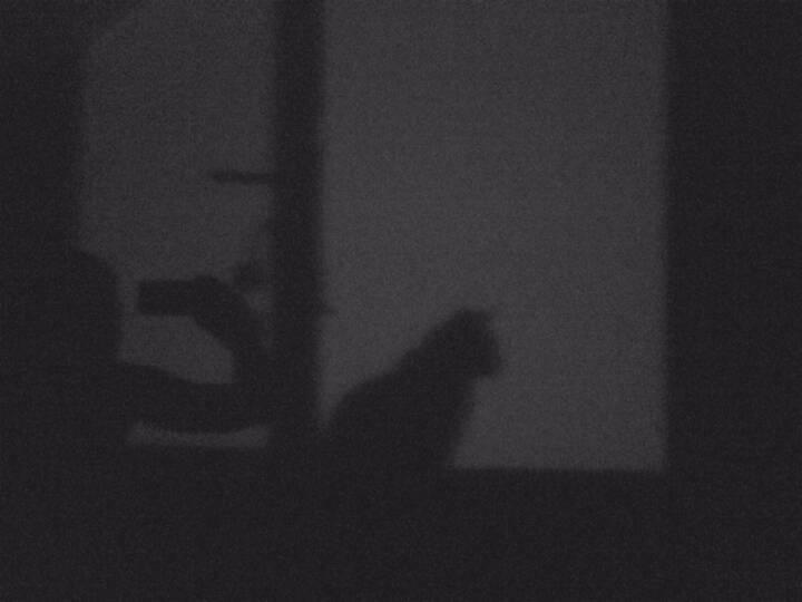 Schatten, Katze