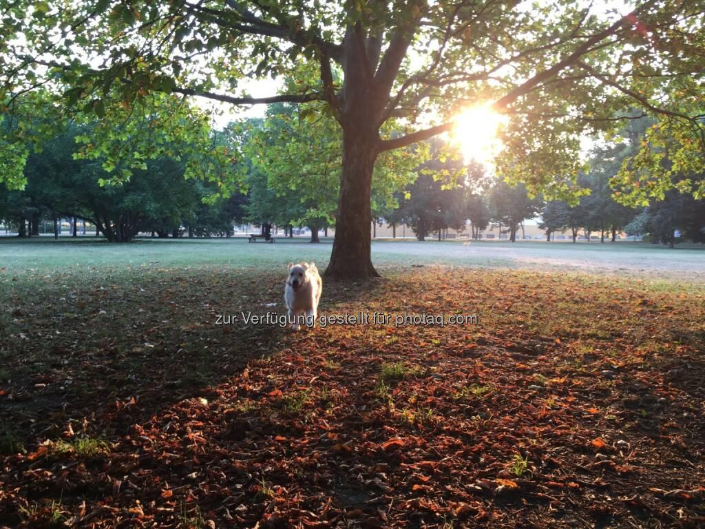 Kelly im Park (14.08.2015)