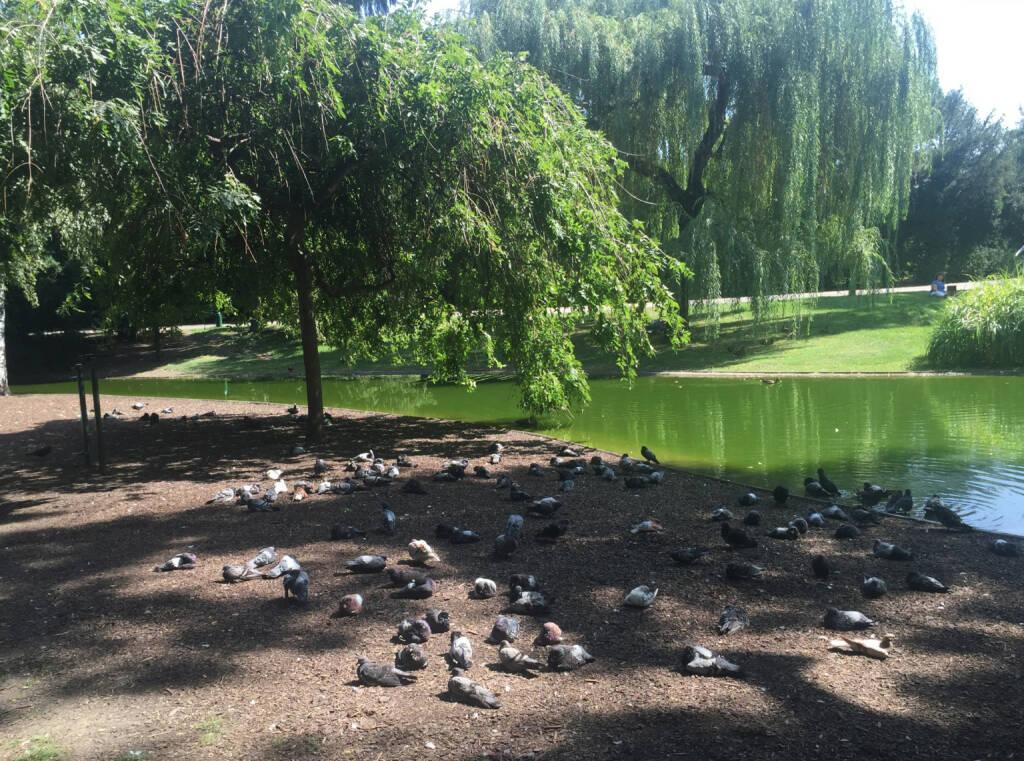 Ruhe Enten Stadtpark (29.08.2015)