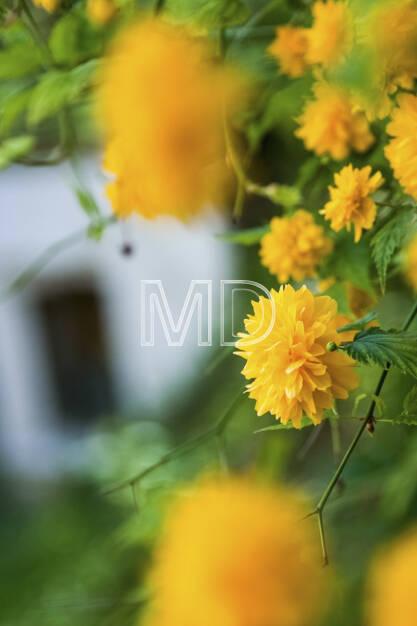 Blumen, © (C) Martina Draper (20.03.2013)