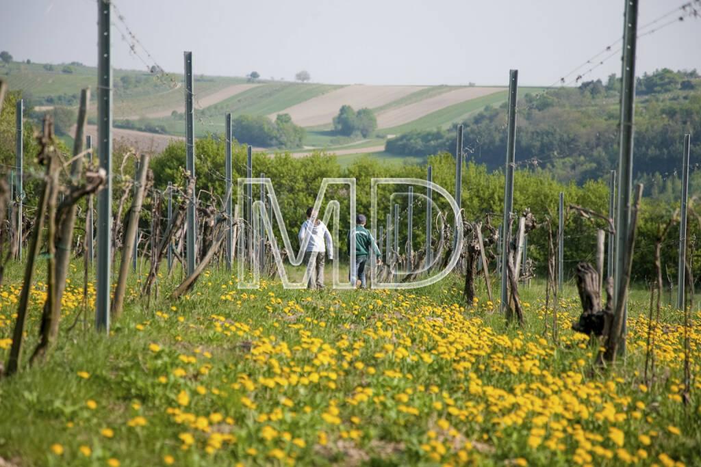 Wein, Wiese, © (C) Martina Draper (20.03.2013)