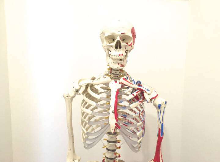 Skelett nackt