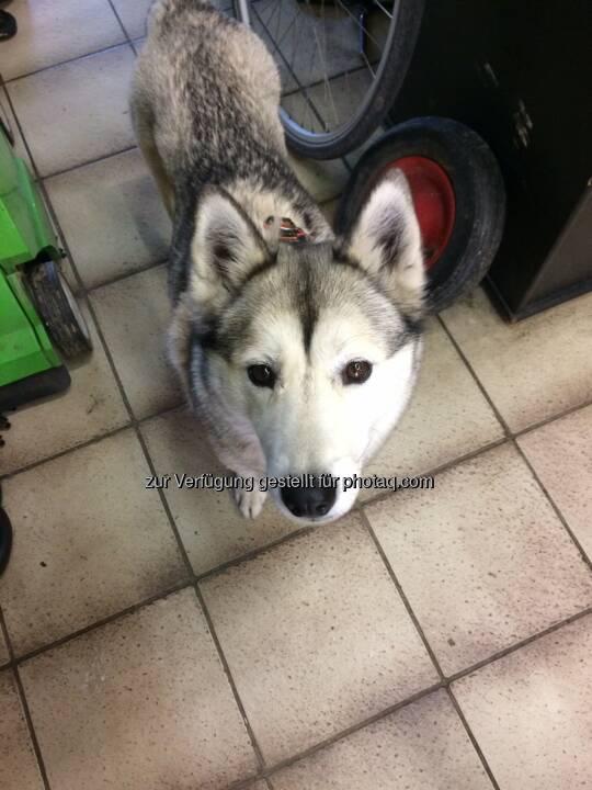 Hund, Onida