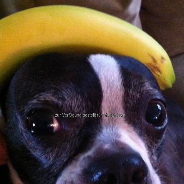Bananing Dog https://www.facebook.com/bananingofficial (22.03.2013)