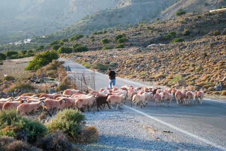 Schaf, Schafe, Herde, folgen, verfolgen, nach, hinten nach