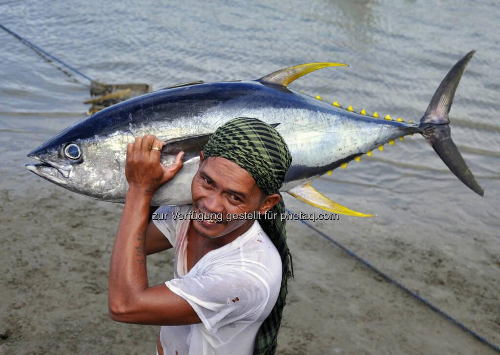 WWF zum Welternährungstag: Überfischung bedroht Mensch und Natur, Thunfisch (Bild: Gregg Yan / WWF), © Aussender (15.10.2015)