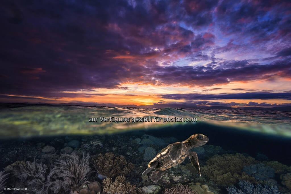 Cebu Philippinen, Sunrise Turtle : Terra Mater Magazin : Sieger des Fotowettbewerbes aus über 2000 Einsendungen gekürt : Das Siegerfoto 2015 von Martin Aigner zeigt eine frisch geschlüpfte Schildkröte unter Wasser – und gleichzeitig einen Sonnenaufgang vor der philippinischen Insel Cebu : Fotocredit: Martin Aigner, © Aussendung (08.02.2016)