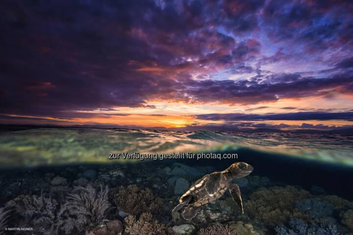 Cebu Philippinen, Sunrise Turtle : Terra Mater Magazin : Sieger des Fotowettbewerbes aus über 2000 Einsendungen gekürt : Das Siegerfoto 2015 von Martin Aigner zeigt eine frisch geschlüpfte Schildkröte unter Wasser – und gleichzeitig einen Sonnenaufgang vor der philippinischen Insel Cebu : Fotocredit: Martin Aigner