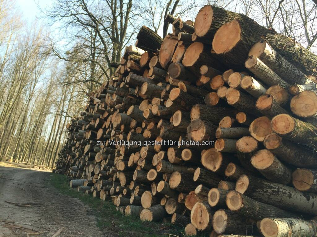 Holz, Holzstapel (02.04.2016)