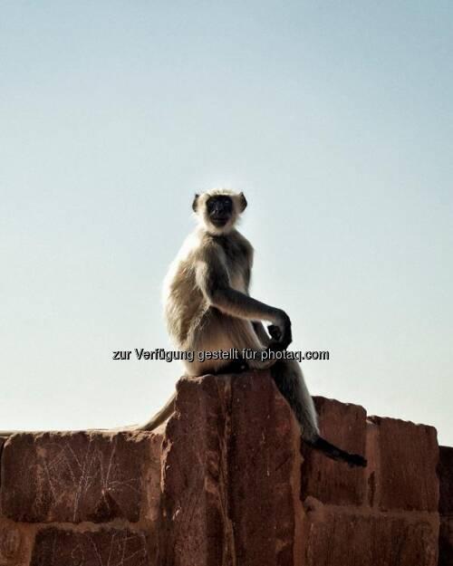 Affe, Indien by http://www.florap.com  (13.04.2013)