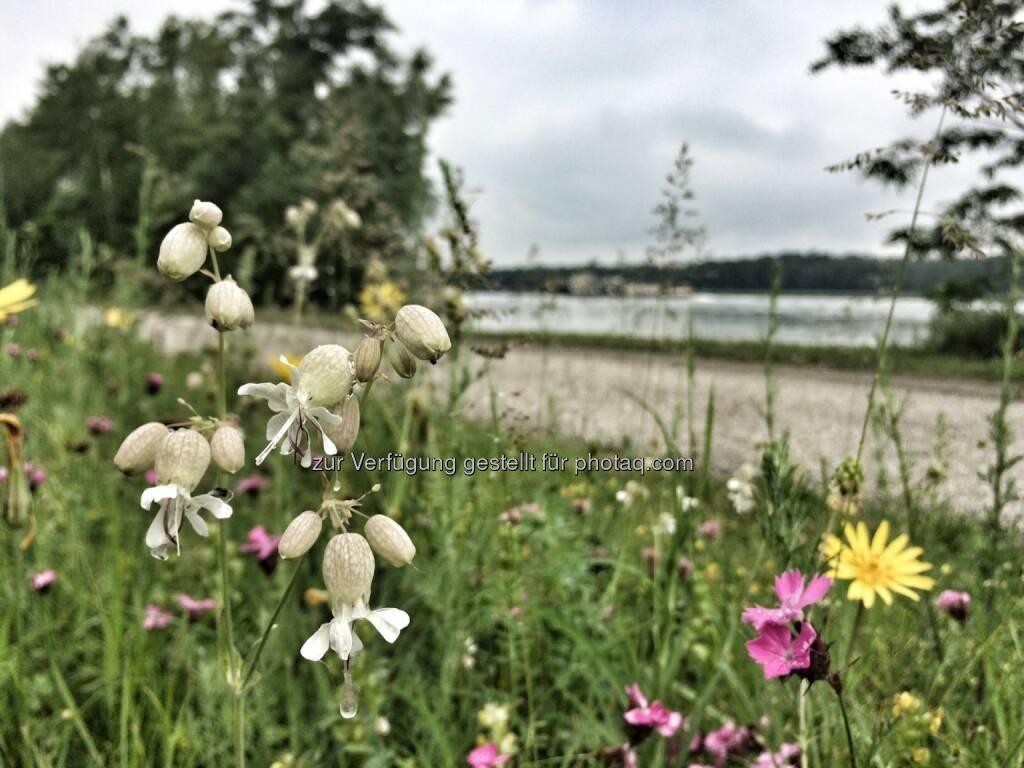 Blumen (29.05.2016)