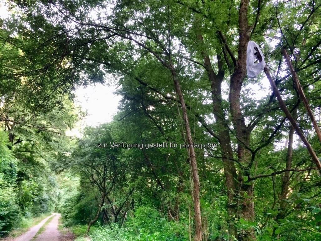 Unterhose im Baum (18.07.2016)