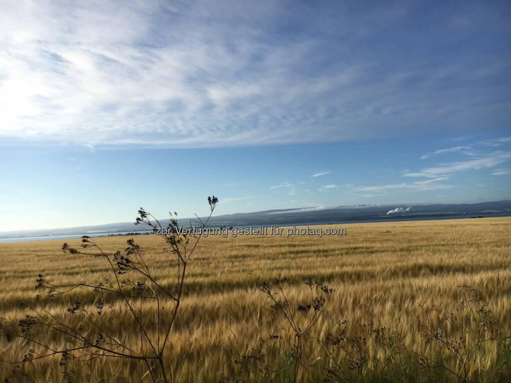Feld, Himmel, Wolken (02.08.2016)