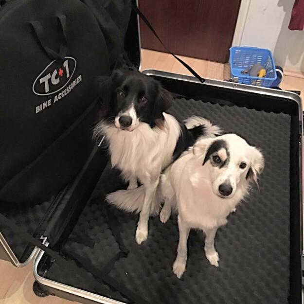 Hunde, Koffer, verreisen, Reise, © Tanja Stroschneider (11.08.2016)