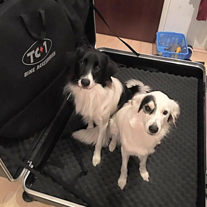Hunde, Koffer, verreisen, Reise