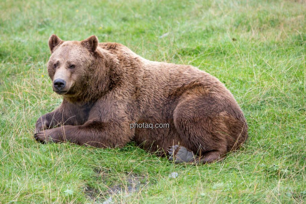 Bär, © Martina Draper (24.08.2016)