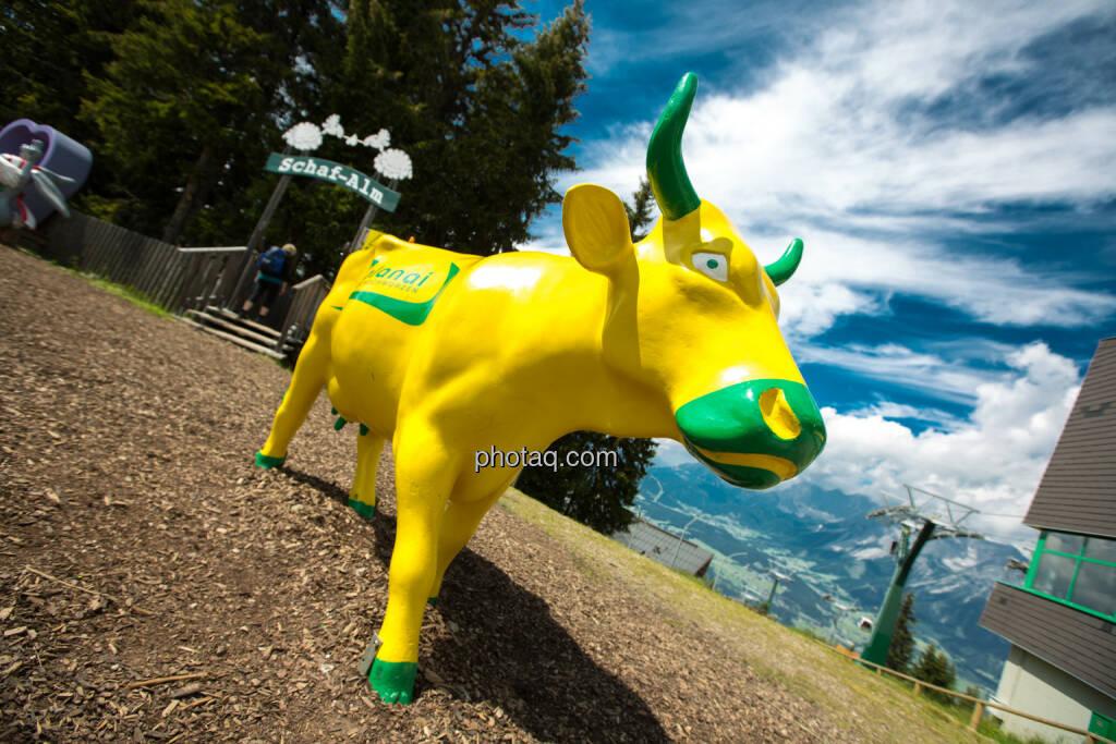 Bulle, Planai, Schladming, © Martina Draper (24.08.2016)