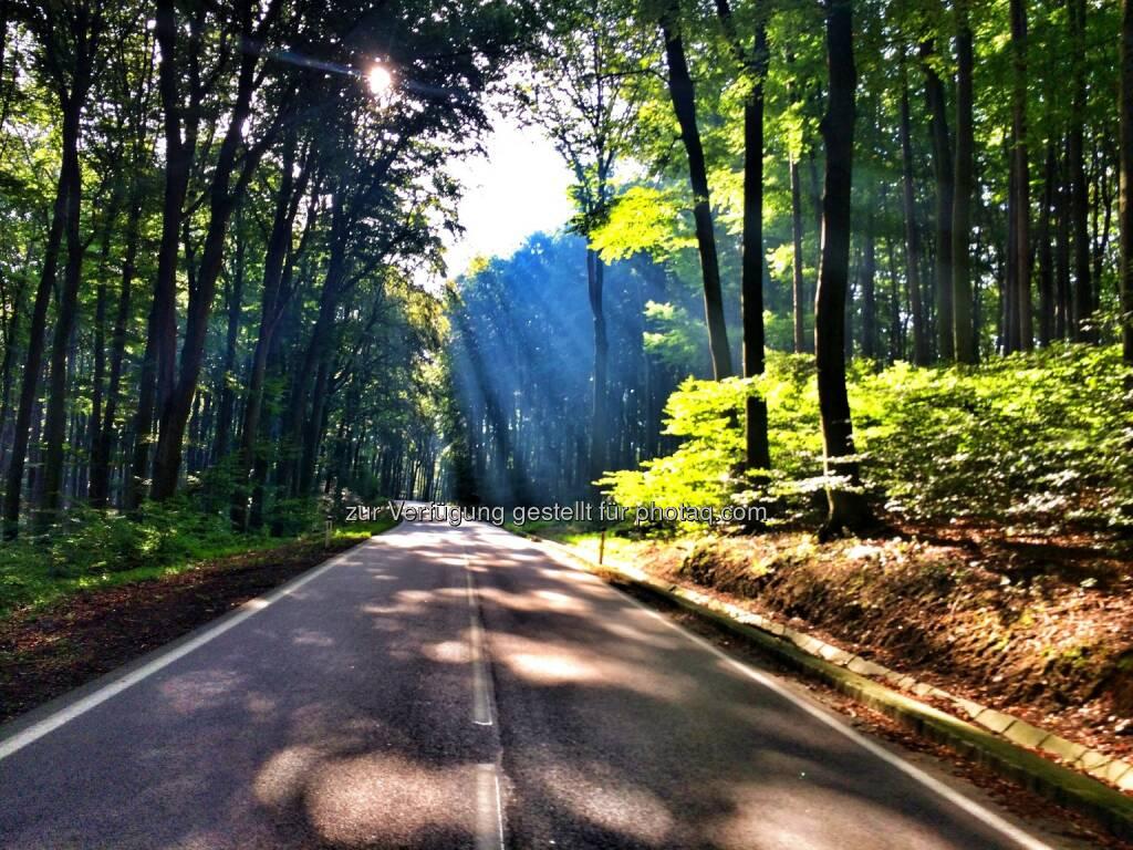Wald, Straße, Weg, Sonne (11.09.2016)