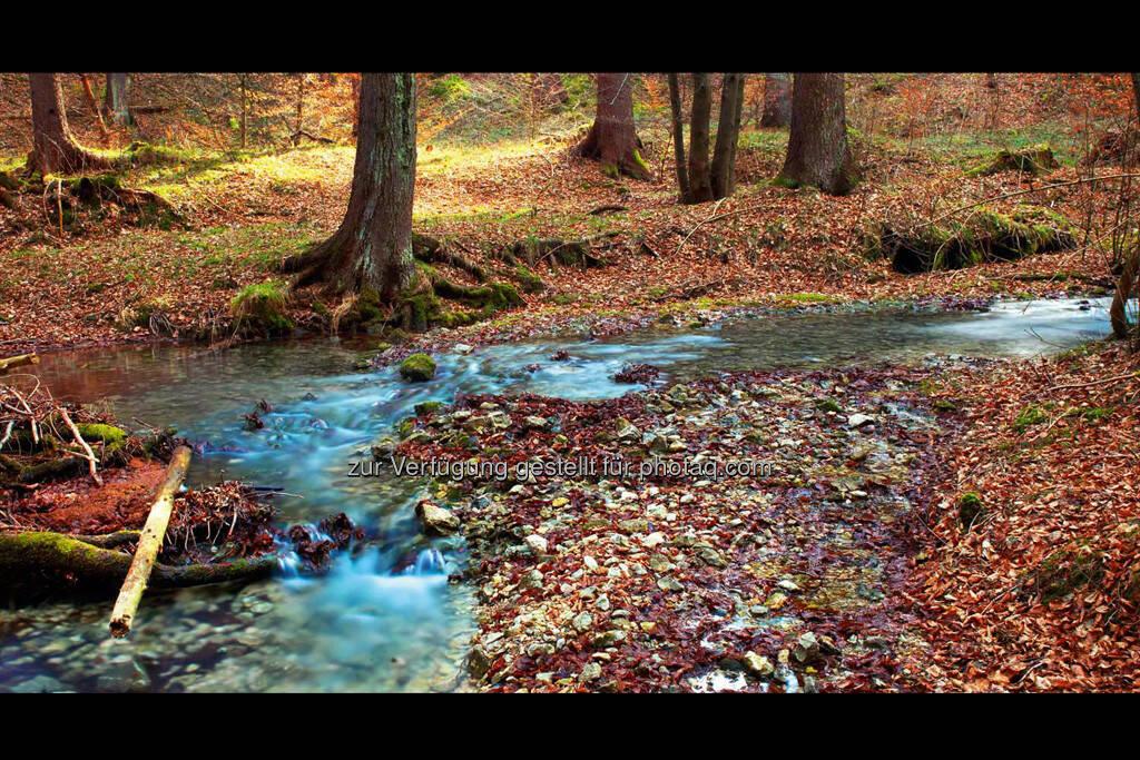 Herbst, by Detlef Löffler, http://loefflerpix.com/ (26.04.2013)