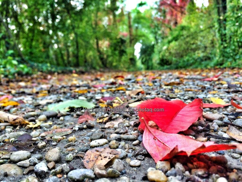 Herbst, Blatt, Wald (05.10.2016)