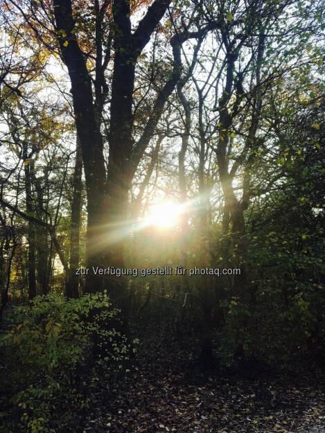 sunbeams (10.11.2016)