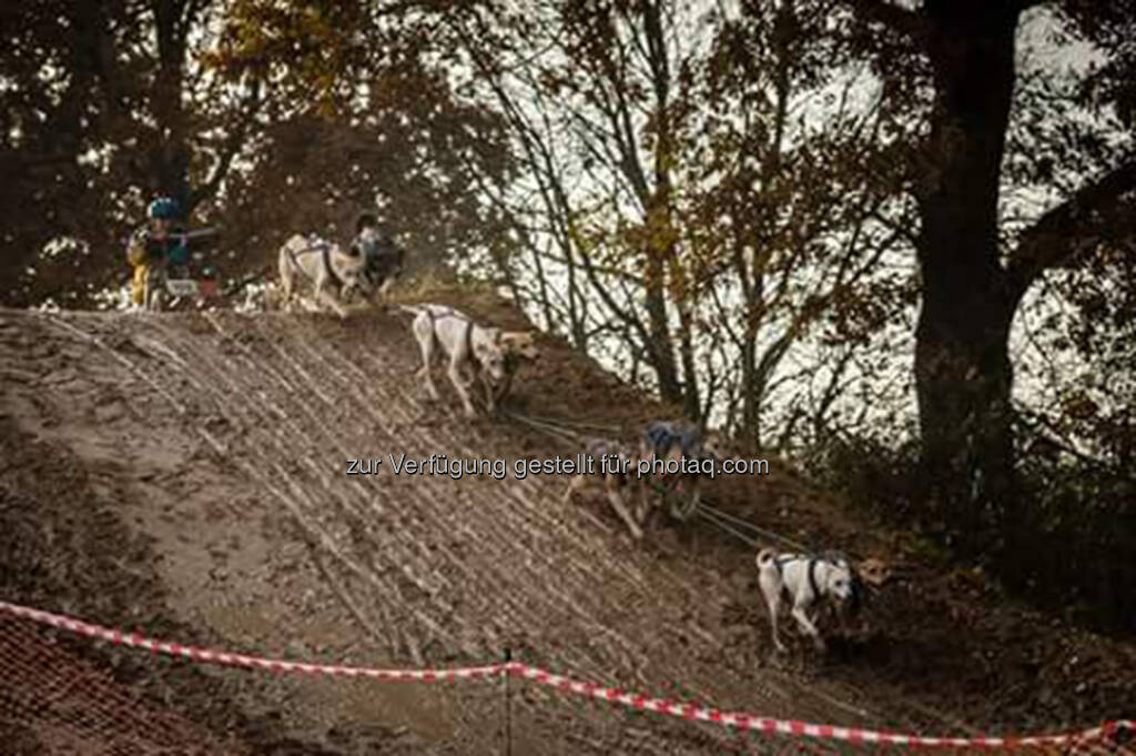 Cani Cross, Hunde (17.11.2016)