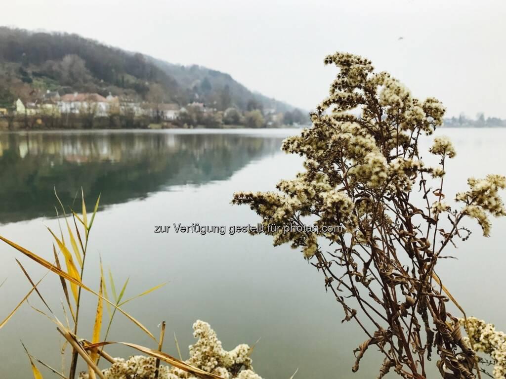 trüber Donaualtarm (23.11.2016)