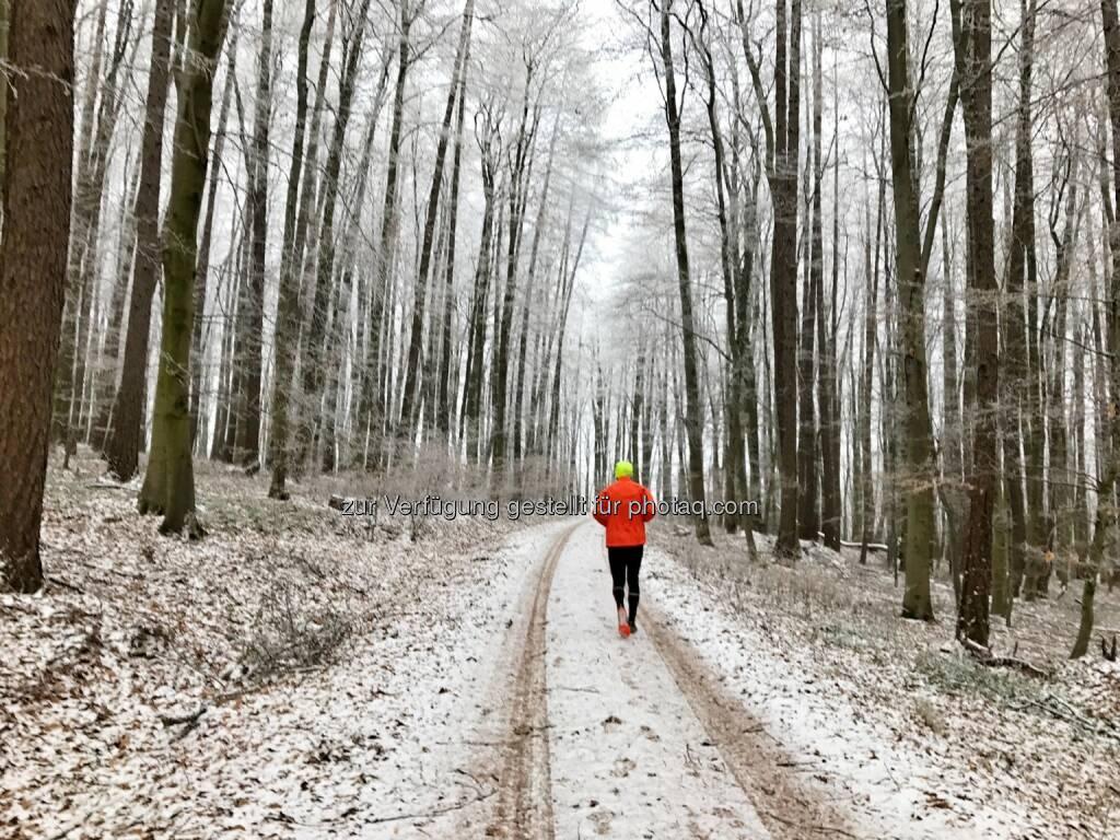 irgendwo im Wald (23.12.2016)