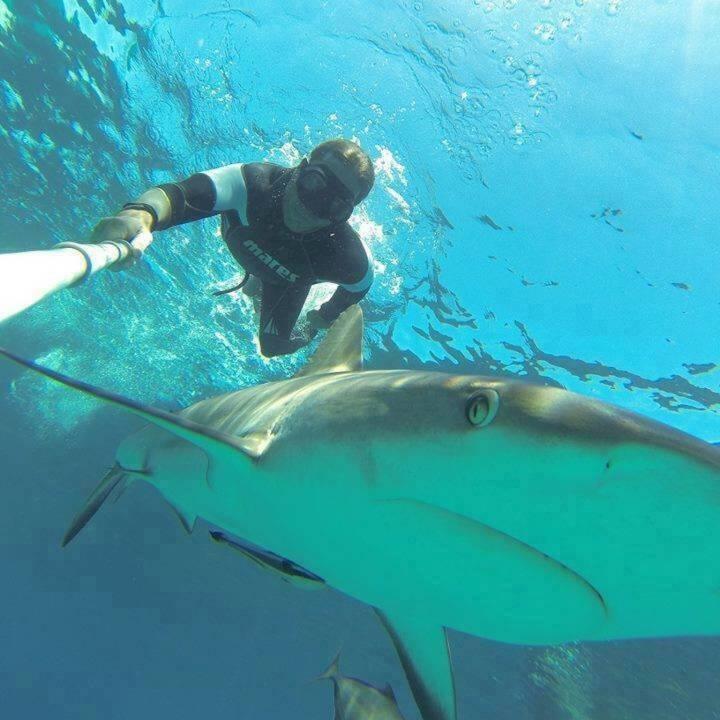 Christian Redl Mein Sportschnappschuss des Jahres!  Vielleicht nicht gleich erkennbar als Sport - aber Freitauchen/Apnoetauchen ist sicherlich ein cooler Sport und die Kombination mit den Haien ein Hailight - Voten und/oder auch sich selbst nominieren unter http://www.facebook.com/groups/Sportsblogged