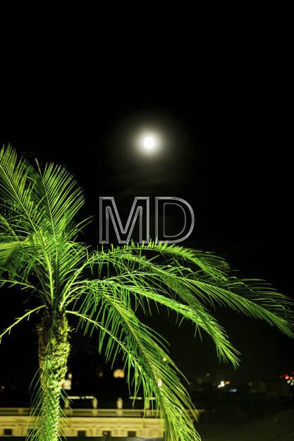 Palme, Mond - Wien bei Nacht, © Martina Draper (15.12.2012)