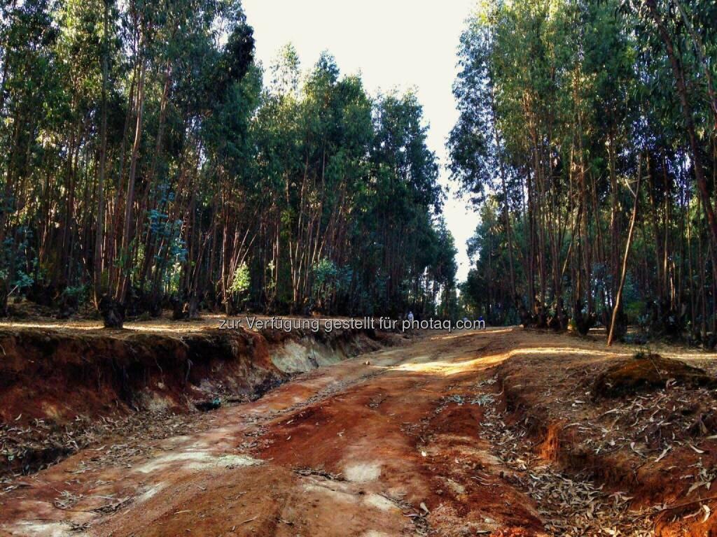 Weg, rote Erde, Äthiopien (11.03.2017)