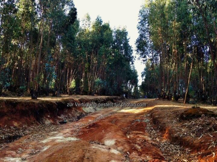 Weg, rote Erde, Äthiopien