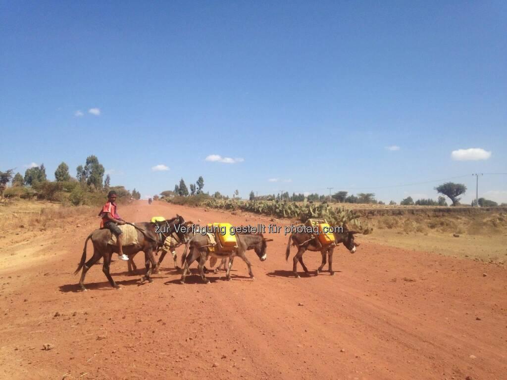 Esel, Karawane, Äthiopien (20.03.2017)