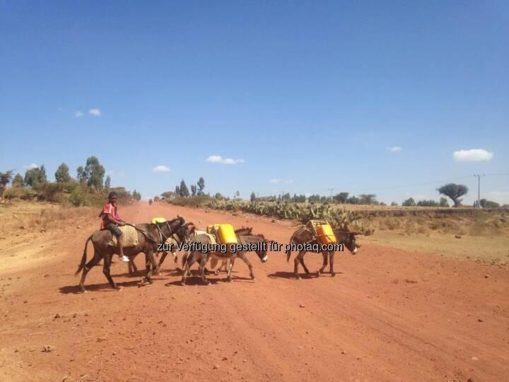 Esel, Karawane, Äthiopien