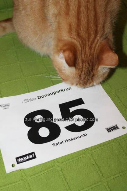 85, Katze, Startnummer (07.06.2017)